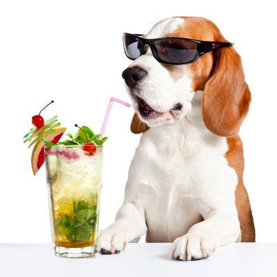 Dogs_Cocktail_Glasses_Beagle_Highball_glass_White_532005_3840x2400
